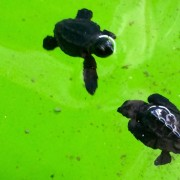 A research trip and baby turtles