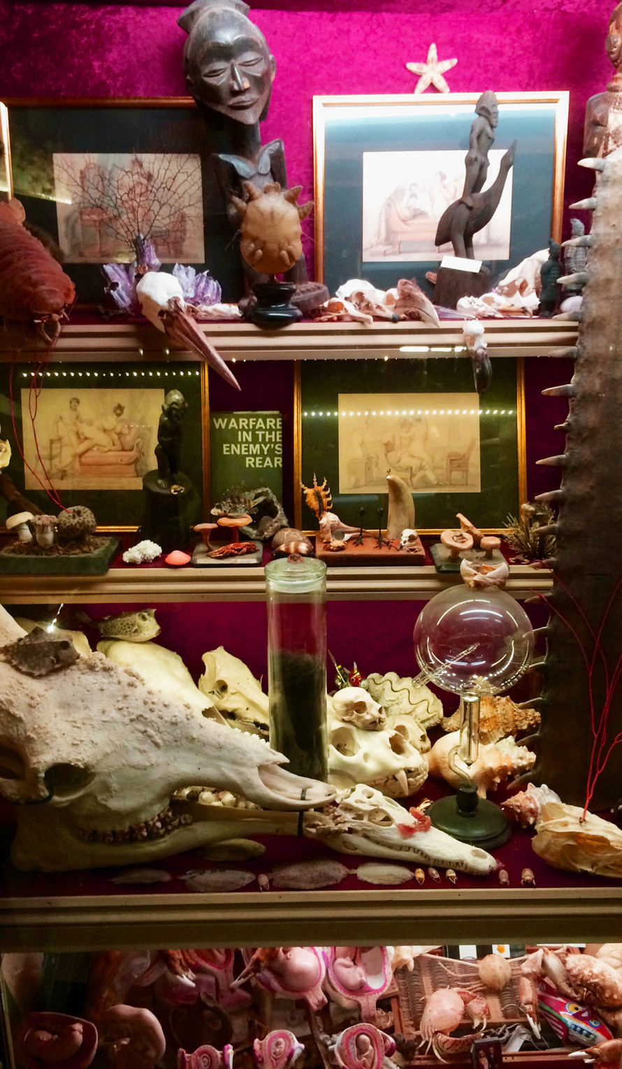 The Viktor Wynd Museum of Curiosities at the Last Tuesday Society - cabinet detail.